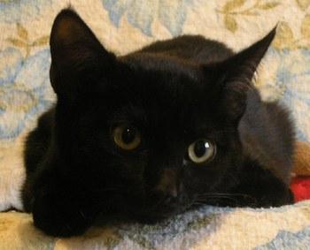8 août : Journée internarionale du chat — le chat dans toute sa beauté 10172610