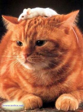 8 août : Journée internarionale du chat — le chat dans toute sa beauté - Page 2 11055010