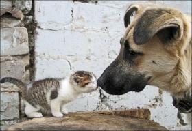 8 août : Journée internarionale du chat — le chat dans toute sa beauté 11336911
