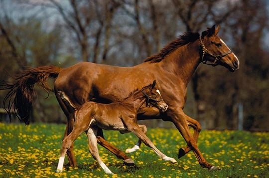 Les chevaux ! 153510