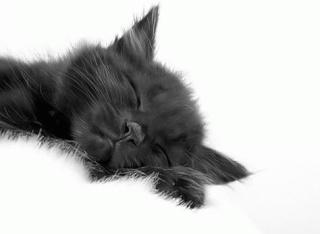 8 août : Journée internarionale du chat — le chat dans toute sa beauté - Page 2 18310