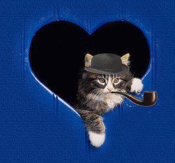 8 août : Journée internarionale du chat — le chat dans toute sa beauté 57tajq10