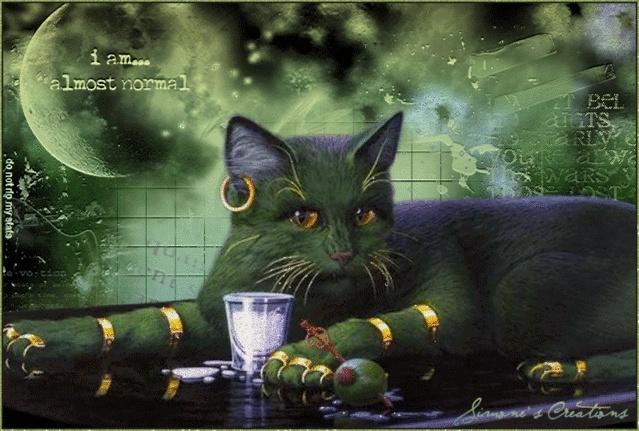 8 août : Journée internarionale du chat — le chat dans toute sa beauté - Page 2 75nxba10