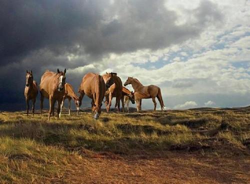Les chevaux ! 78477310