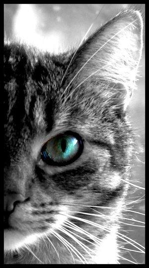 8 août : Journée internarionale du chat — le chat dans toute sa beauté Apu-4-10