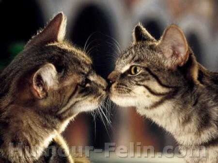 8 août : Journée internarionale du chat — le chat dans toute sa beauté Big_1110