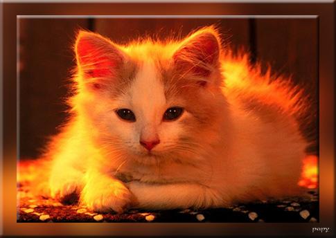 8 août : Journée internarionale du chat — le chat dans toute sa beauté Chat110
