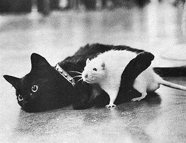 8 août : Journée internarionale du chat — le chat dans toute sa beauté - Page 2 Chat410