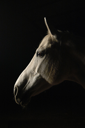 Les chevaux ! Cheval10