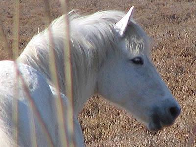 Les chevaux ! Cheval12