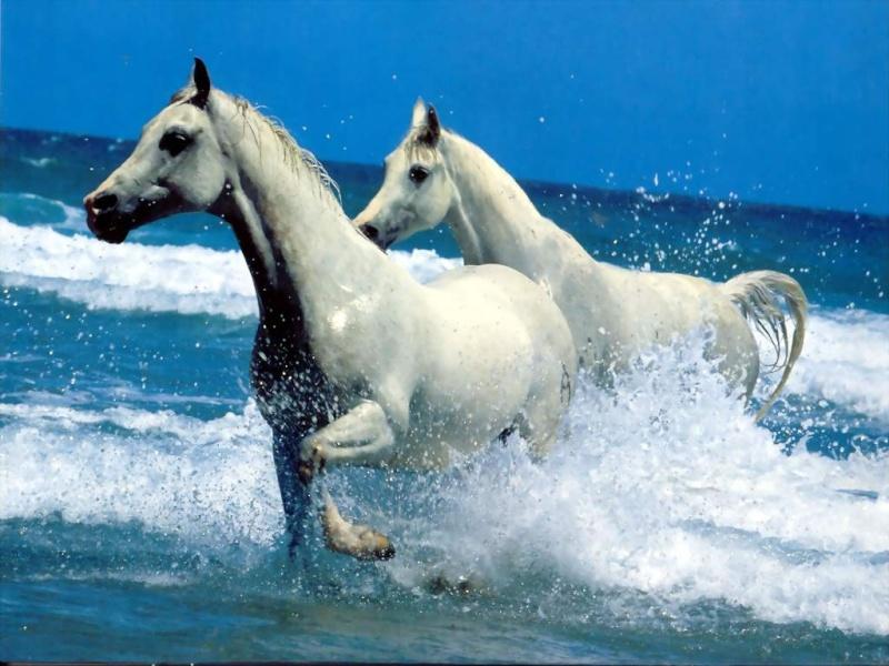 Les chevaux ! Chevau10