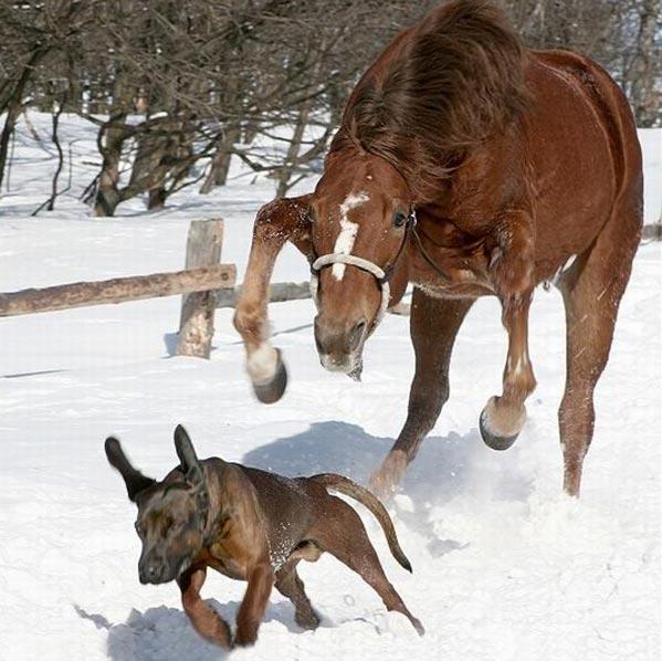 Les chevaux ! Chien-10