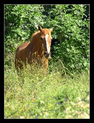Les chevaux ! Compli10