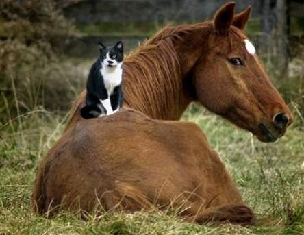 Les chevaux ! Humour10