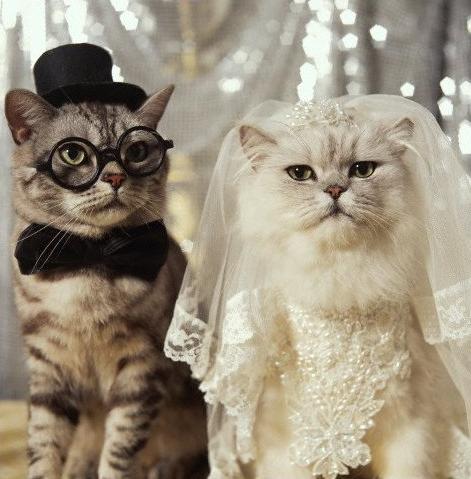 tenue pour aller à un mariage Humour12