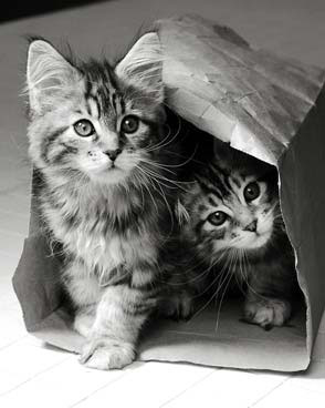 8 août : Journée internarionale du chat — le chat dans toute sa beauté Pl145h10