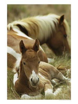 Les chevaux ! Qcp9ba10