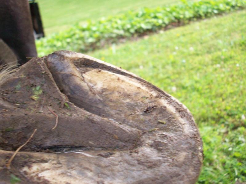 Pathologies du pied: décollement de la paroi Anteri11