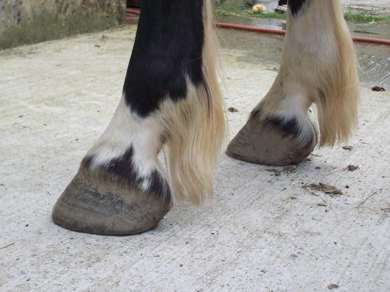 Pathologies du pied: décollement de la paroi Anteri14