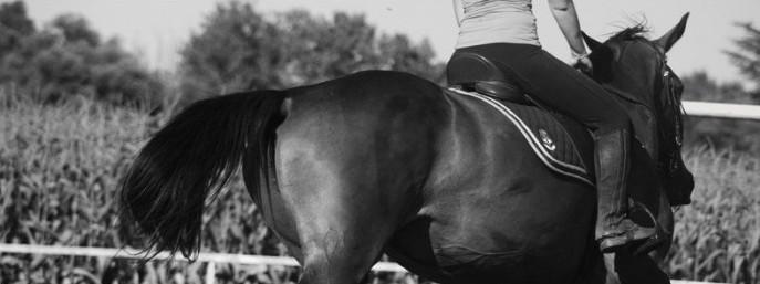 Chevaux de propriétaires [11 chevaux] Sans_t46