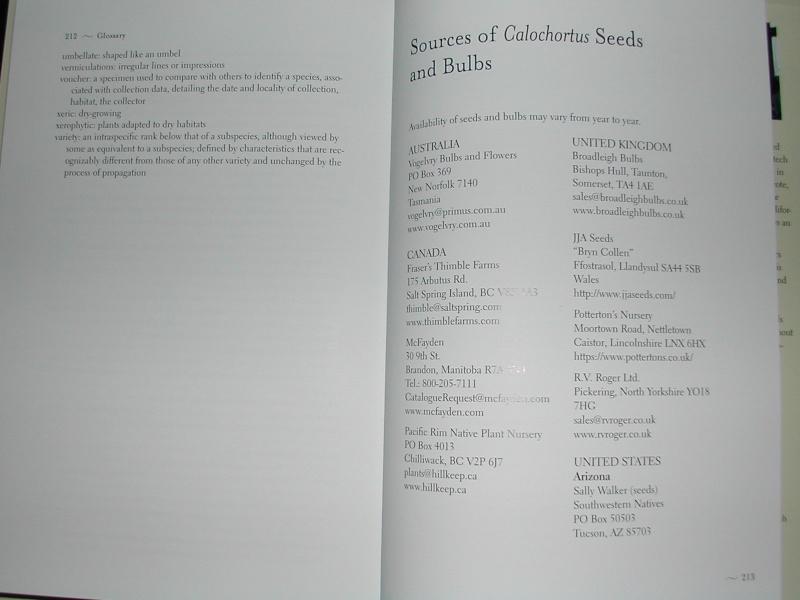 Calochortus Dscn3620