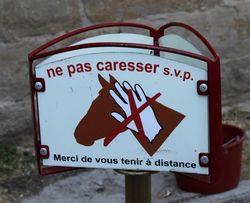 Carcassonne et sa Cité Img_8310