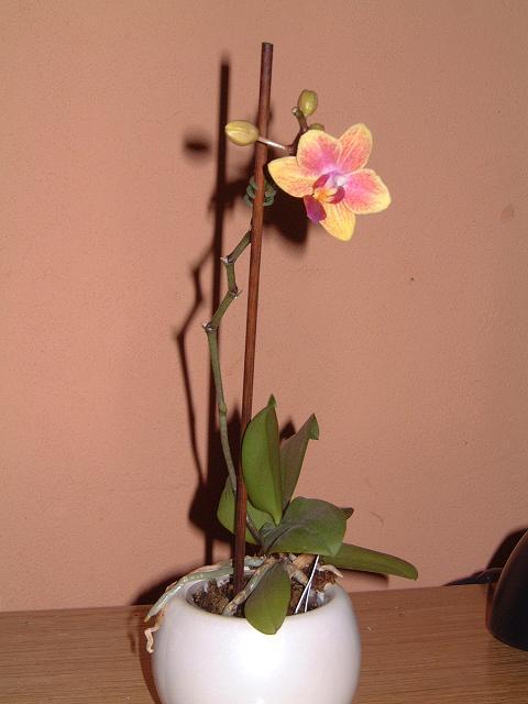 premiere floraison Dscf0013