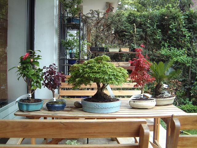 arbres acheté chez Galinou Dscf0020