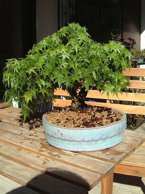 arbres acheté chez Galinou Dscf0134
