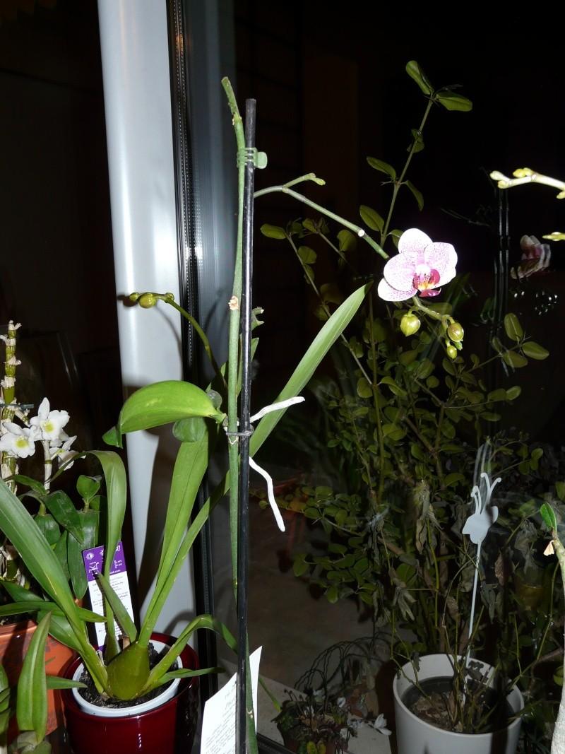 floraison sans fin P1050057