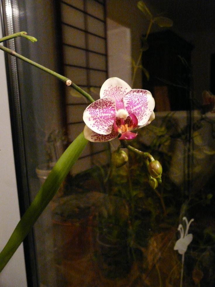 floraison sans fin P1050058