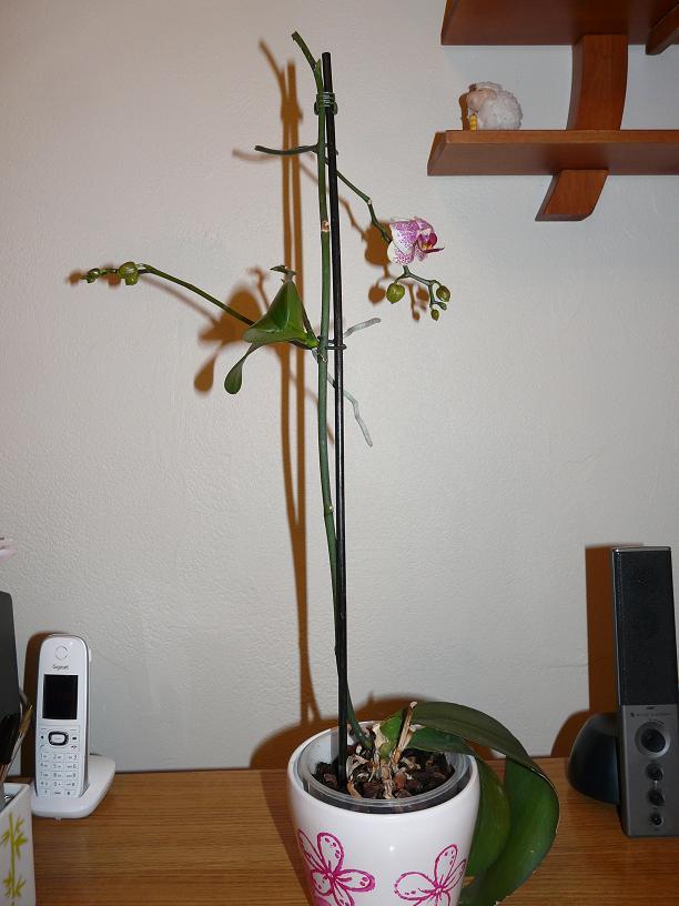 floraison sans fin P1050060