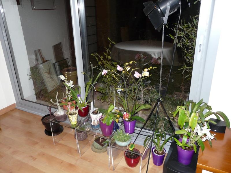 floraison sans fin P1050061