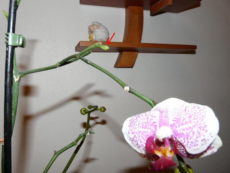 floraison sans fin P1050111