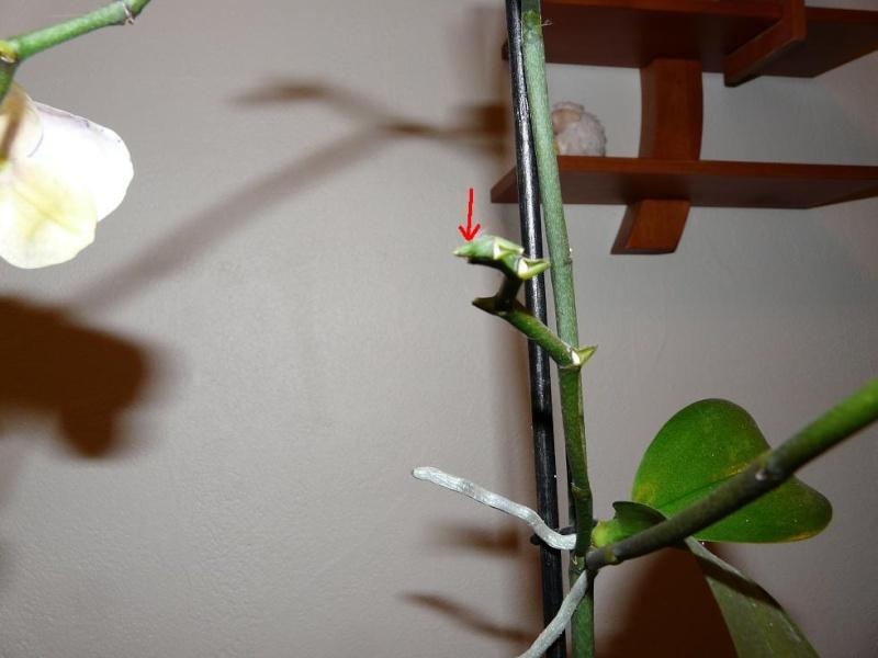 floraison sans fin P1050113