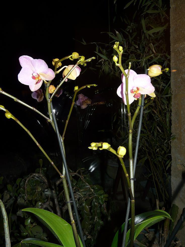 floraison sans fin P1050118