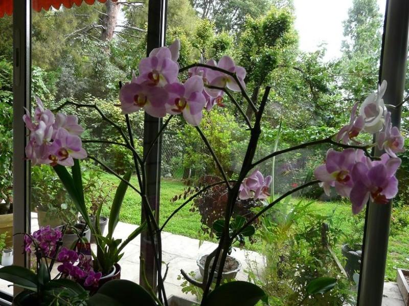 Floraison du moment P1050619