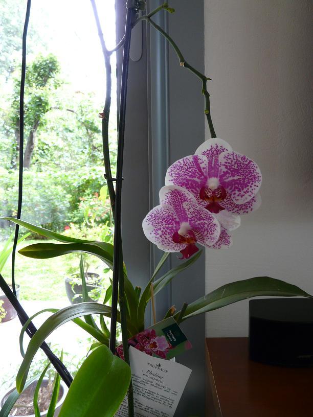 Floraison du moment P1050620
