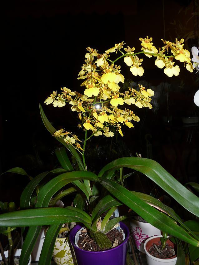 Floraison du moment P1060444