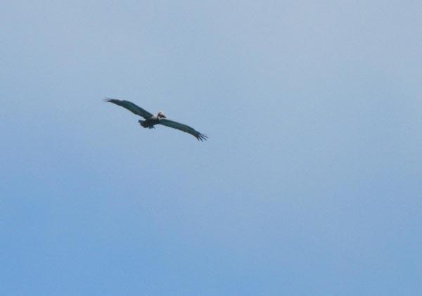 Un oiseau à Cuba #2 Img_2110