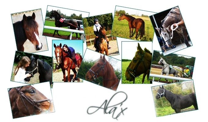 Ala'x, forum sur les animaux Babaal10