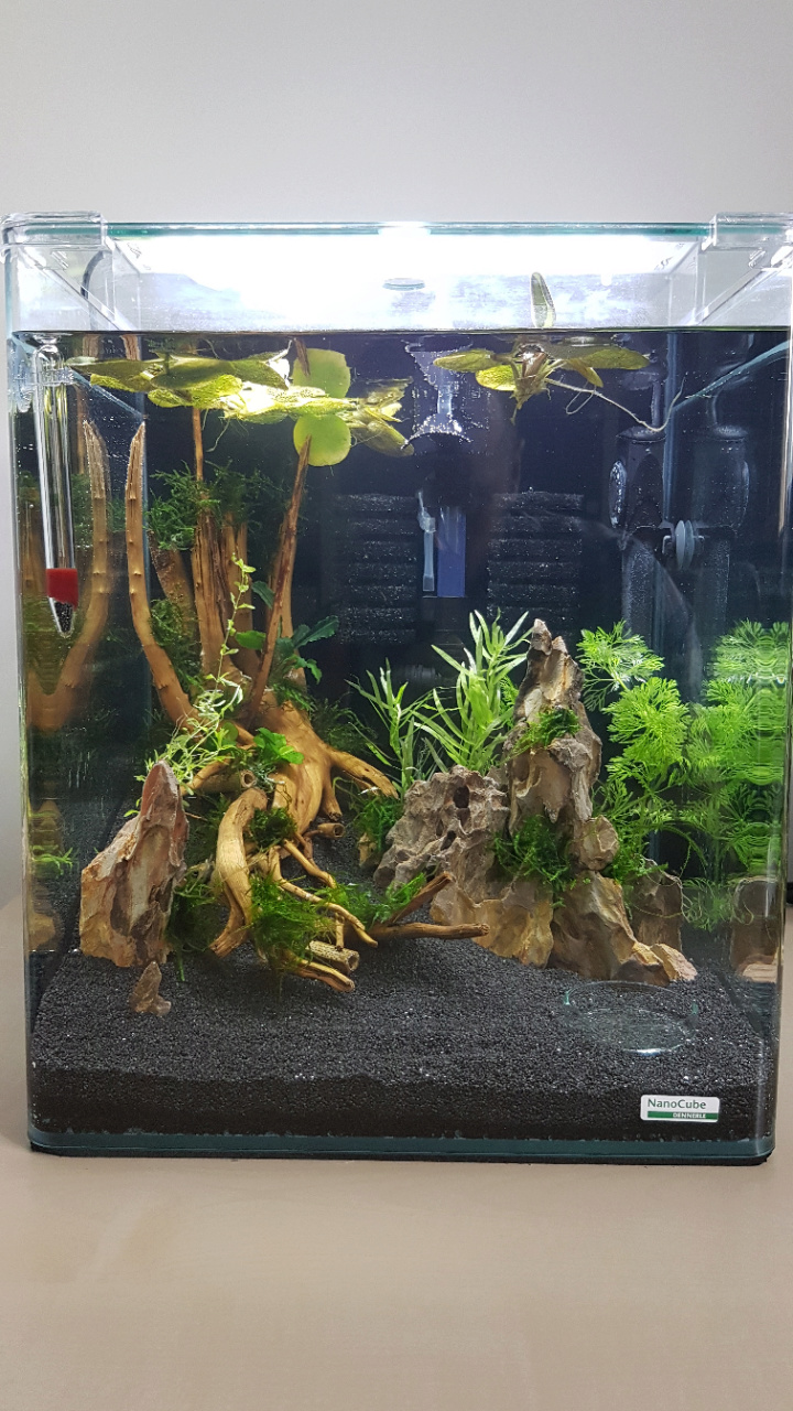 Premier aquarium, Nano 30L pour Néocaridina 20200710