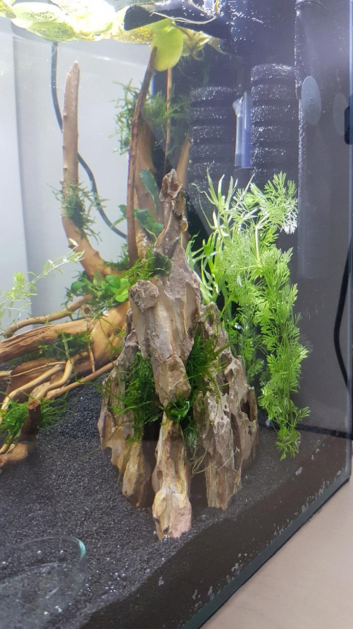 Premier aquarium, Nano 30L pour Néocaridina 20200711