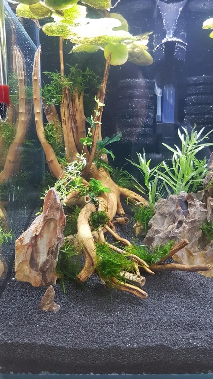 Premier aquarium, Nano 30L pour Néocaridina 20200712