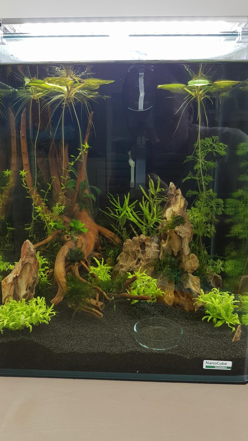 Premier aquarium, Nano 30L pour Néocaridina 20200713