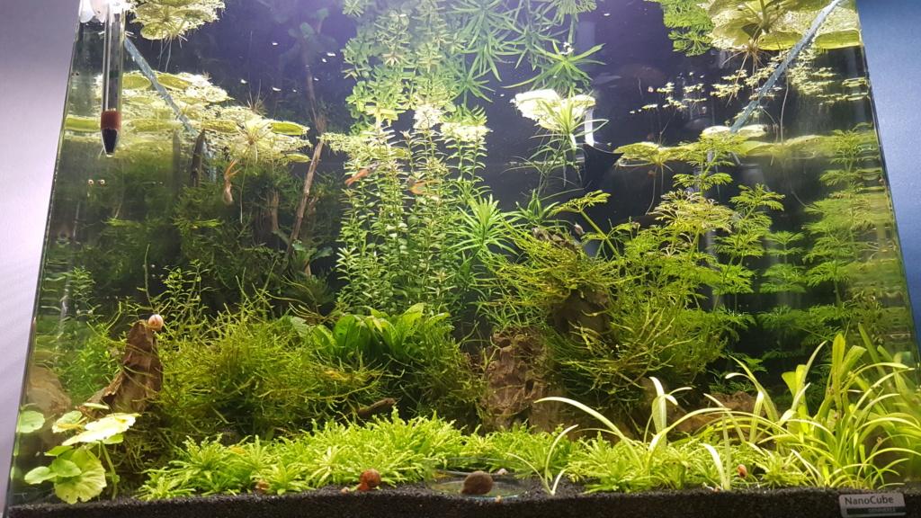 Premier aquarium, Nano 30L------>55L  pour Néocaridina - Page 2 20201011