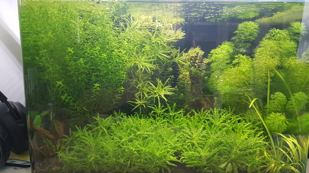 Premier aquarium, Nano 30L------>55L  pour Néocaridina - Page 2 20210515