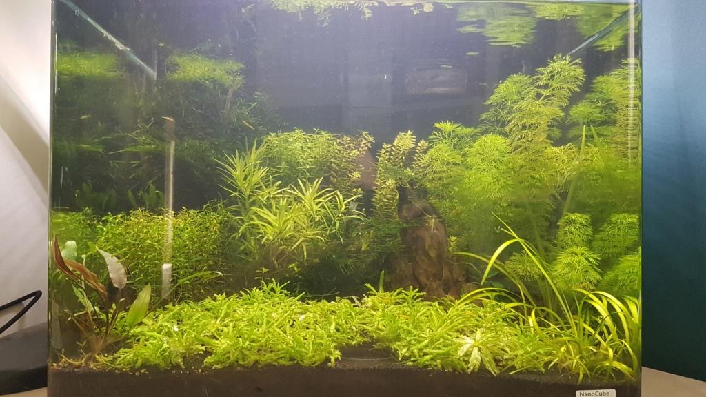 Premier aquarium, Nano 30L------>55L  pour Néocaridina - Page 2 20210516