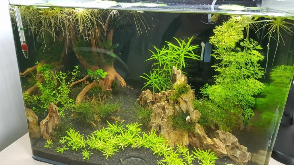 Premier aquarium, Nano 30L------>55L  pour Néocaridina 28_aou11
