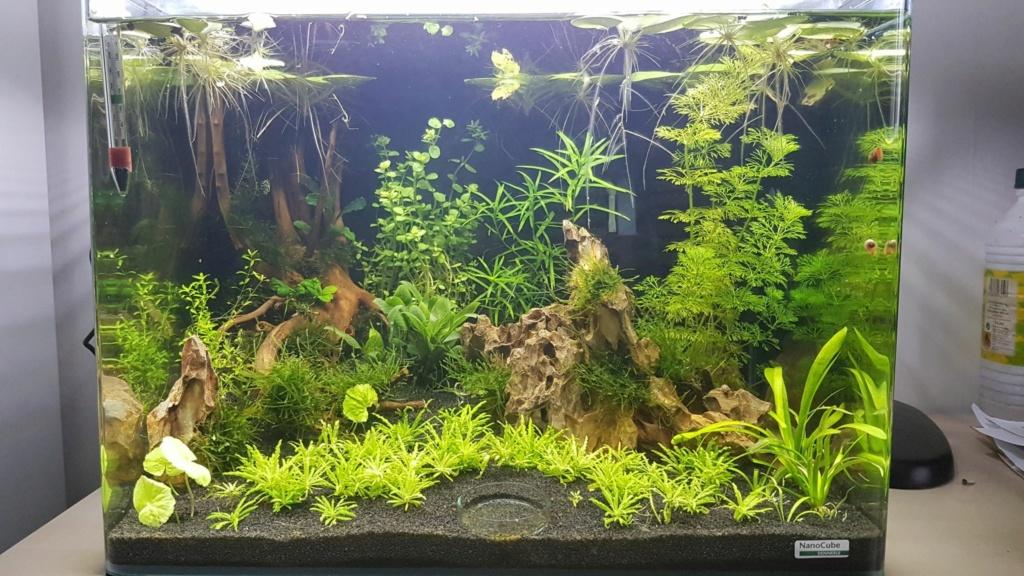 Premier aquarium, Nano 30L------>55L  pour Néocaridina - Page 2 30_aou11
